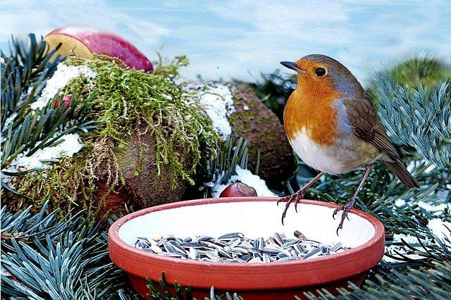 robin on food dish