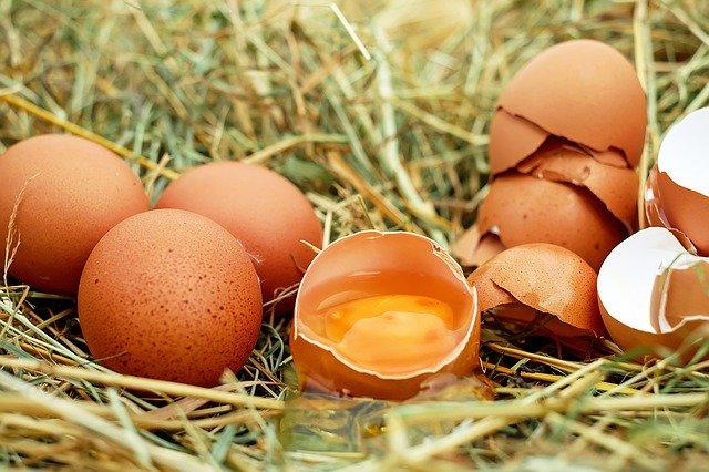 Do Wild Garden Birds Like Egg & Is It Good For Them?