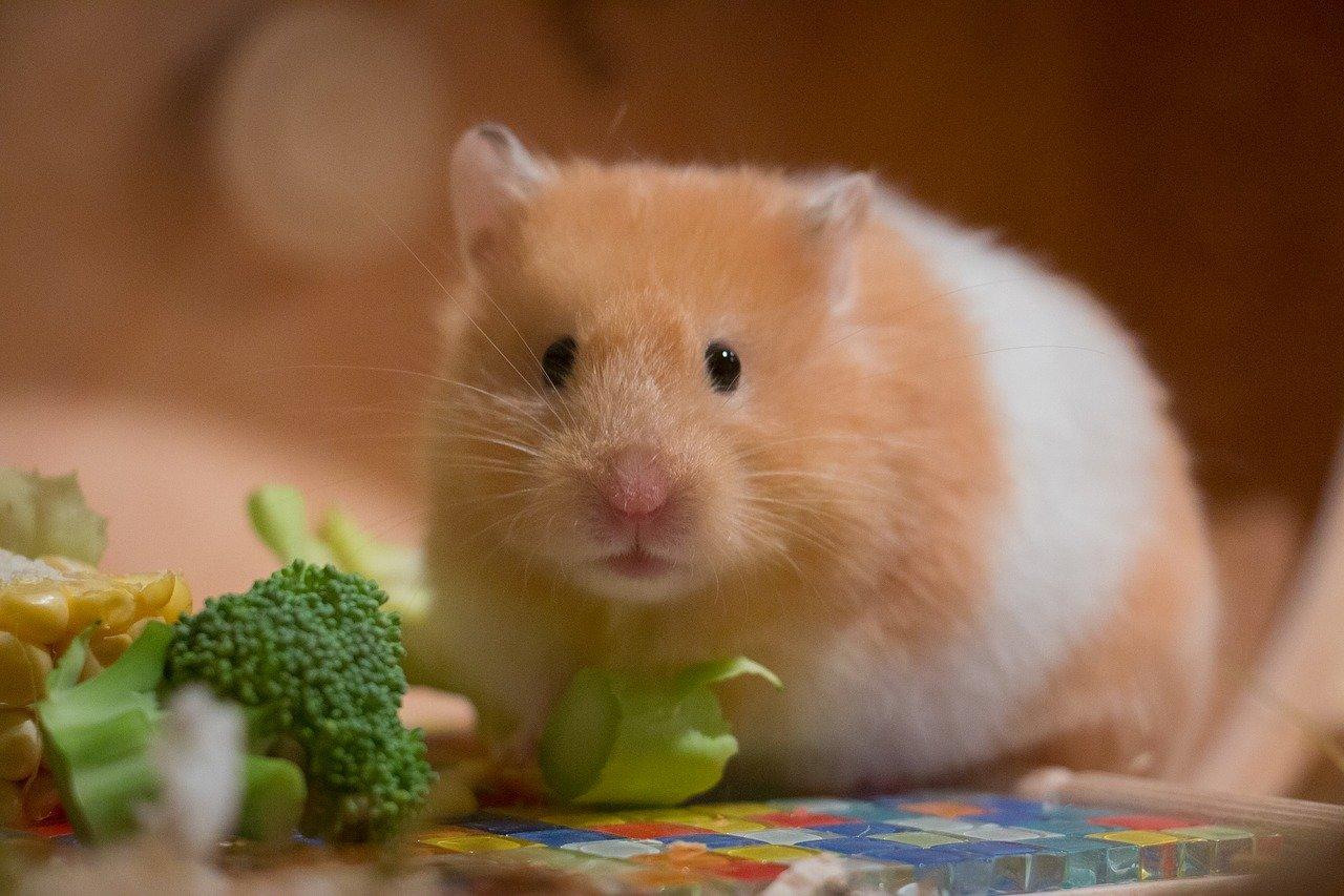 Do Wild Garden Birds Like Hamster Food & Is It Good For Them?