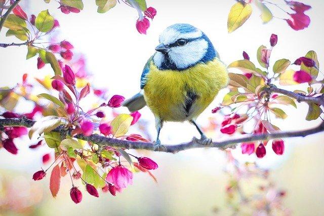 Attract Wild Birds to Your Garden/Backyard FAST…